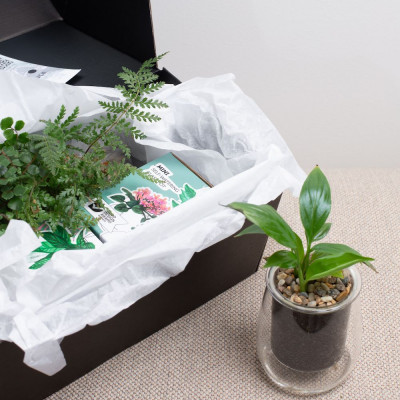 Miei's Indoor Plant Kit